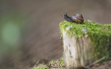 blur, moss, snail, stump
