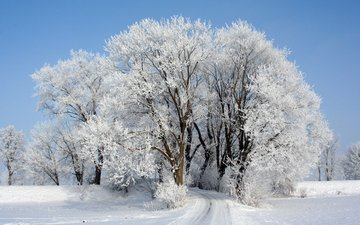 the sky, road, trees, snow, winter, frost