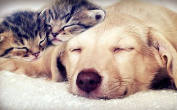 sleep, dog, cats, kittens, faces, closed eyes