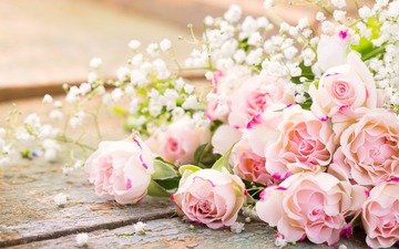 flowers, buds, roses, petals, bouquet, gypsophila, beautiful bouquet