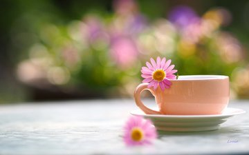 flower, petals, blur, cup, tea