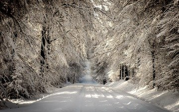 road, trees, snow, forest, winter, branches, frost