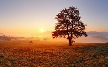 the sky, light, tree, morning, fog, horizon, dawn, meadow, tree in a field