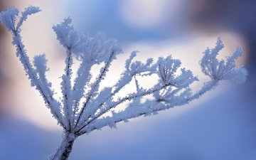 snow, nature, winter, macro, frost, plant