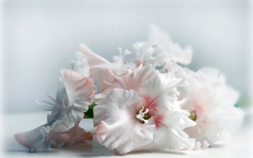 bouquet, flowers, gladiolus
