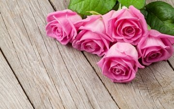 flowers, buds, roses, petals, board, bouquet