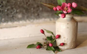buds, petals, spring, vase, apple, flowers