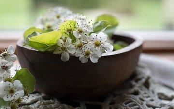 цветы, цветение, листья, лепестки, весна, салфетка, груша, миска