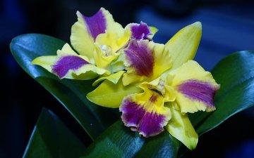 flowering, leaves, petals, orchid, flowers