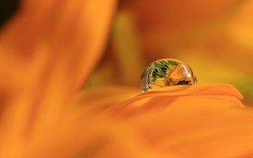 макро, отражение, цветок, роса, капля, лепестки