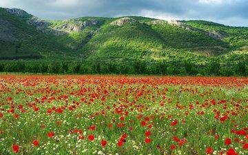 цветы, горы, холмы, природа, цветение, маки, луг, ромашки, болгария
