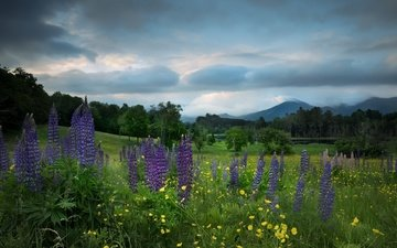 the sky, flowers, clouds, trees, mountains, field, summer, lupins