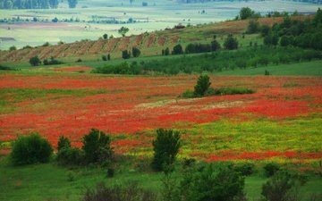 цветы, природа, цветение, пейзаж, луг