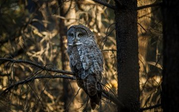 trees, owl, forest, branches, bird