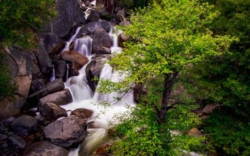 tree, stones, waterfall, stream, gorge