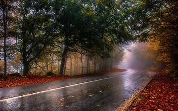 road, forest, fog, autumn