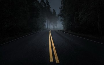 road, night, forest