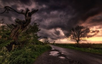 road, clouds, tree, landscape, puddle