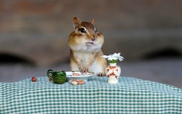 nuts, table, bouquet, animal, breakfast, tablecloth, chipmunk