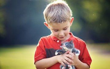 kitty, children, child, boy, friends