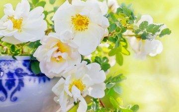 цветы, ветки, лепестки, шиповник, ваза