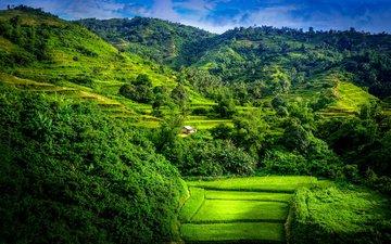 деревья, горы, лес, пейзаж, поле, террасы, рисовые террасы
