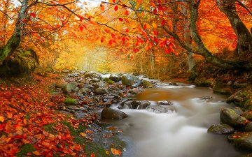 trees, nature, stones, forest, leaves, stream, autumn, romania