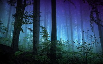 trees, nature, forest, fog, trunks, darkness