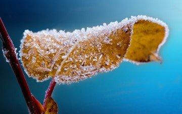 природа, иней, осень, лист, крупным планом