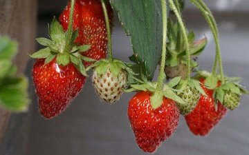 macro, summer, strawberry, berries