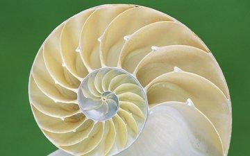macro, spiral, shell, sink
