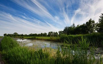the sky, road, grass, clouds, trees, greens, swamp, netherlands, the reeds, tina