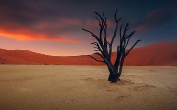 the sky, clouds, sunset, sand, desert, snag, dunes, drought
