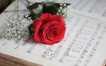 flowers, notes, rose, petals, bud, gypsophila