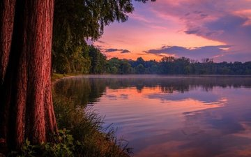 the sky, grass, clouds, trees, the evening, lake, shore, forest, sunset