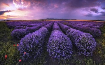 the sky, clouds, field, lavender, horizon, flowers, bulgaria