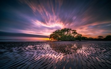 the sky, clouds, water, tree, shore, reflection, sunset, the ocean