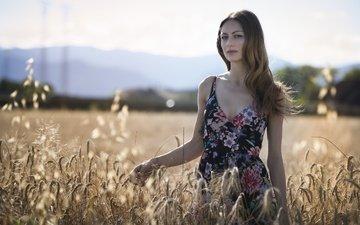 девушка, платье, поле, лето, взгляд, модель, колосья, волосы, лицо, erika