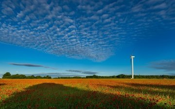 the sky, flowers, grass, clouds, field, summer, maki, windmill