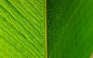 текстура, цвет, лист, прожилки, зеленый лист