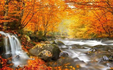 trees, river, stones, forest, leaves, waterfall, autumn, romania