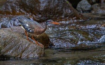 stream, stone, bird, beak, heron, solar heron