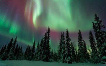 небо, снег, природа, лес, зима, сияние, северное сияние, сосны, ели