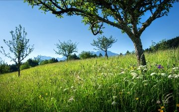 the sky, flowers, grass, trees, mountains, slope, meadow