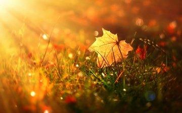 трава, осень, блики, лист, кленовый лист