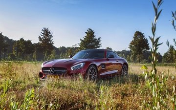 grass, side view, amg, mercedes