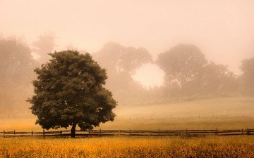grass, trees, nature, landscape, morning, fog, field, the fence, new jersey, sunlight, shrubs, tree