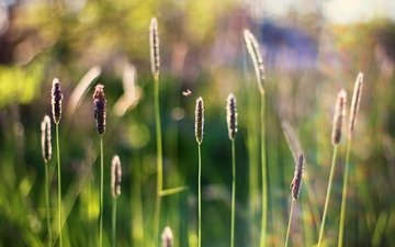 grass, insect, blur, stems, bokeh