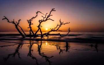 branch, sunset, reflection, sea, beach, usa, island, snag, the sun