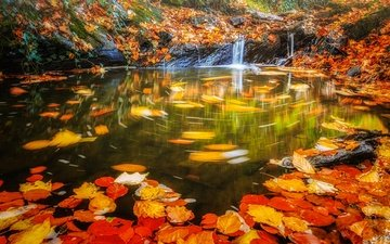 water, leaves, waterfall, autumn, stream